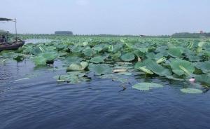 保定要用50天清除白洋淀废弃物,改善雄安新区生态环境