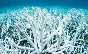 全球珊瑚白化灾情暂缓,专家警告:这次范围最广、危害最重