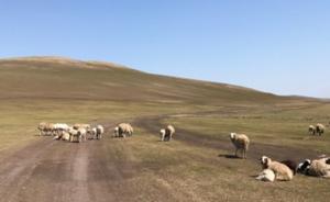内蒙古呼伦贝尔旱情严重9876万亩草场受旱,5万人饮水难