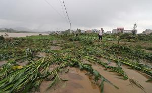"""洪灾后农作物如何""""求生"""":专家吁抓紧排水、准备救灾备用种"""
