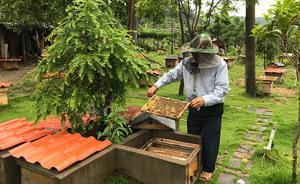 【砥砺奋进的五年】福建林改:下岗护林工带残疾户养林蜂脱贫