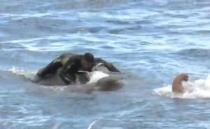 大象困海中,斯里兰卡海军12小时救援
