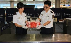吃货入境:宁波口岸行李中截获6斤多重活龙虾,还有熟蜘蛛蟹