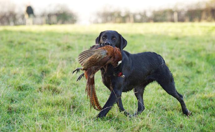 """爱狩猎的英国人,在""""野味""""这件事上有什么心得"""