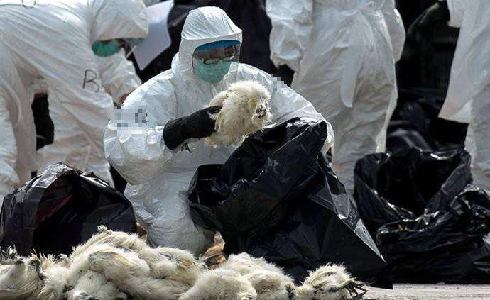 越南南部省份出現H5N1型禽流感疫情,約千只家禽被撲殺