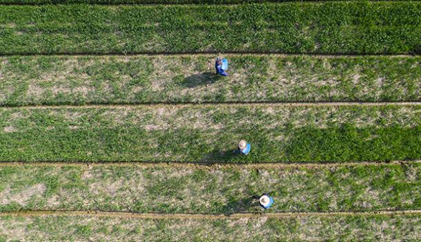 习近平对全国春季农业生产工作作出重要指示