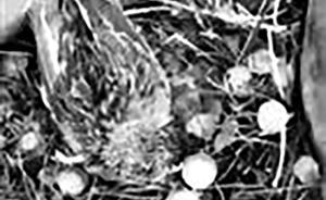 冰雹来袭鸟妈护雏被砸死,辽宁网友接力抚养幼鸟