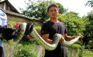 国家一级保护动物缅甸蟒横穿高速险遭碾,获云南警方救助