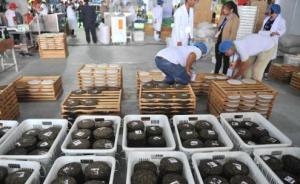 云南省卫计委:云南普洱茶未检出黄曲霉毒素
