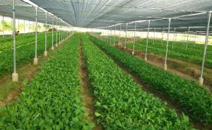 上海将划定50万亩蔬菜生产保护区,发展高效生态农业