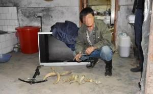 团伙自制枪支炸弹在东北虎豹国家公园猎杀黑熊,共8人被抓获