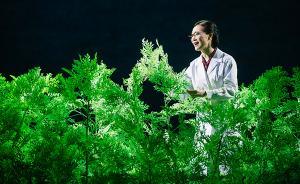 上海国际艺术节 歌剧《呦呦鹿鸣》讲述诺奖获得者的故事
