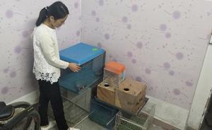 深圳养鸟人卖珍稀鹦鹉获刑案二审开庭,专家将出庭发表意见
