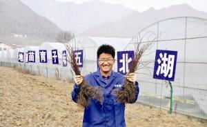 湖北男子放弃25万年薪工作返乡当村官,带村民发展药材种植