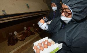 """韩国检出本土""""毒鸡蛋""""全面停售,蛋价自去年已因禽流感高企"""