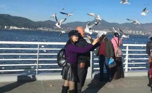 游客在昆明观赏海鸥时抓一只欲合影,涉非法捕猎被罚625元