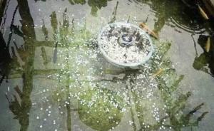 小伙捞走丽江一景区许愿池硬币7.2元,被行政拘留10日