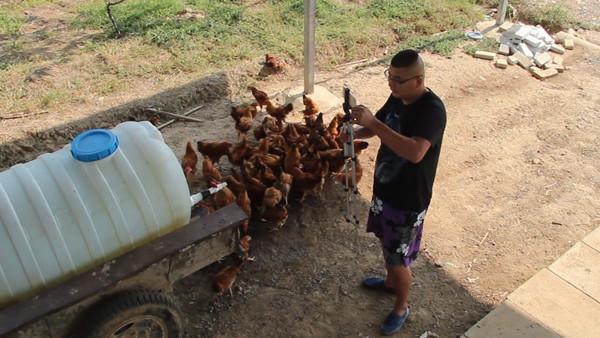 0816农民养鸡视频