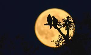 """""""超级月亮""""将在全球各地现身,是近80年来的第八大满月"""