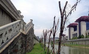 """官方回应""""南昌红谷滩三千米景观树大面积枯死"""":因涨水浸泡"""