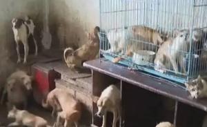 苏州老人13年收养70多只流浪猫狗,邻居不堪其扰纷纷搬走