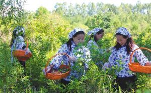 大小兴安岭禁伐三年:黑龙江森林人的生态保护与经济转型之路