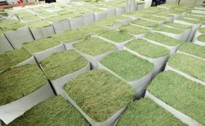天津退运近350吨美国转基因苜蓿草,申报时显示为非转基因