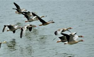 """河北督导唐山、沧州两市候鸟保护,要求严格部署""""野保清网"""""""