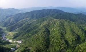 广东森林防火条例9月施行,森林防火区禁止野外用火上坟烧纸