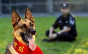 吉林四平警犬退役后会被吃掉?警方辟谣:会由训导员领养