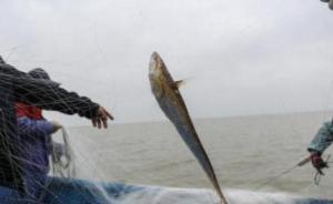 农业农村部回应长江刀鱼将全面禁捕:已严重过度捕捞
